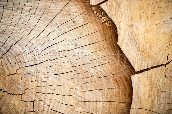 ломтик дерево кольца древесины Сток-фото © kyolshin
