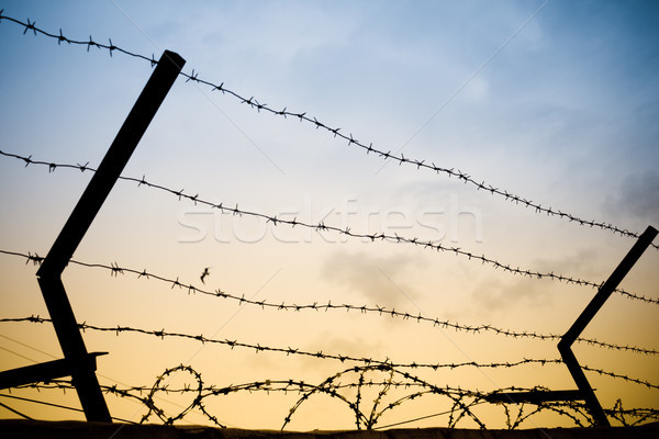 barbwire Stock photo © kyolshin