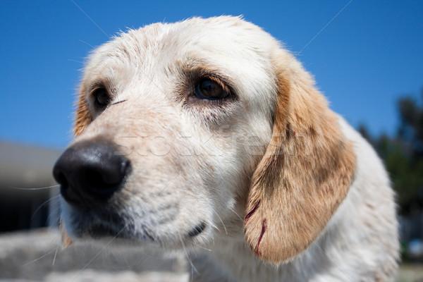 Stok fotoğraf: üzücü · köpek · yavrusu · evsiz · mavi · gökyüzü · gökyüzü · bebek