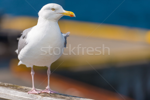 Seagull standing on railing near water Stock photo © kyolshin