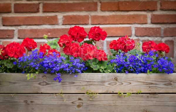Bloem vak muur Europa Rood muur Stockfoto © kyolshin