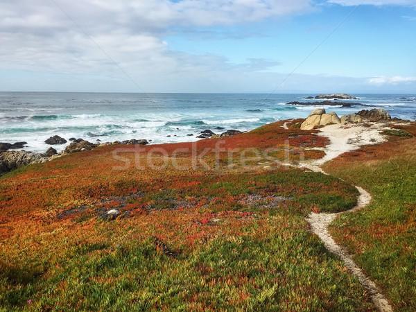 Pacific ocean cost in California, USA Stock photo © kyolshin