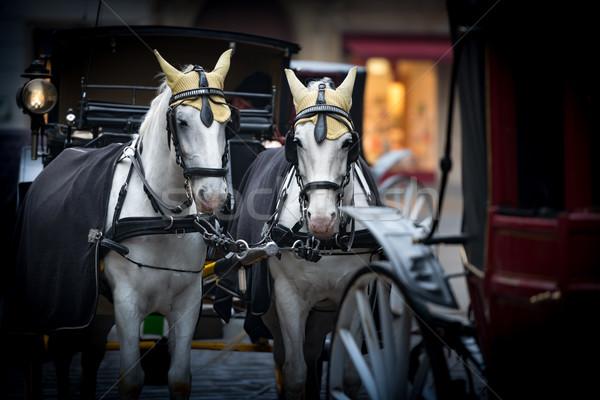 Horses and carriage on stefansplatz in Vienna. Stock photo © kyolshin