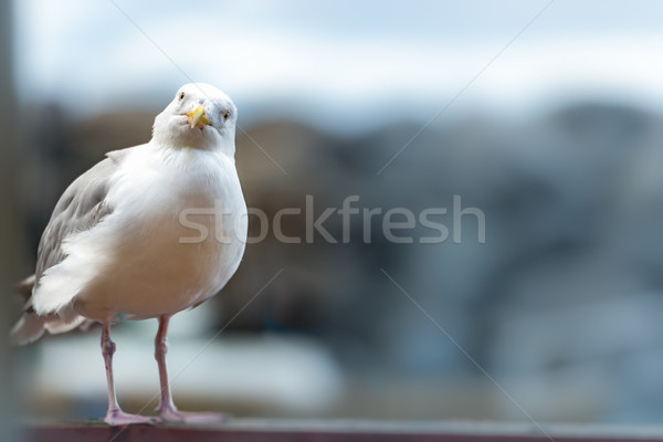 Seagull standing on railing near water Stock photo © kyolshin