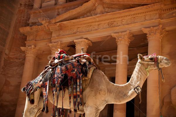 camel against treasury Stock photo © kyolshin