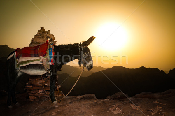 ロバ 山 ヨルダン 孤独 日没 自然 ストックフォト © kyolshin