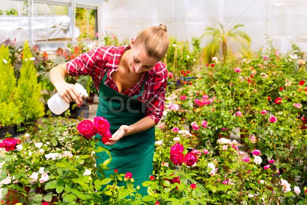Stock photo: Female gardener in market garden or nursery