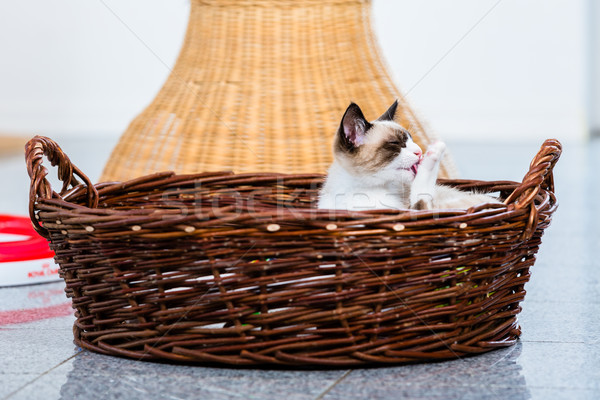 Cute cat licking its paw in wicker basket Stock photo © Kzenon