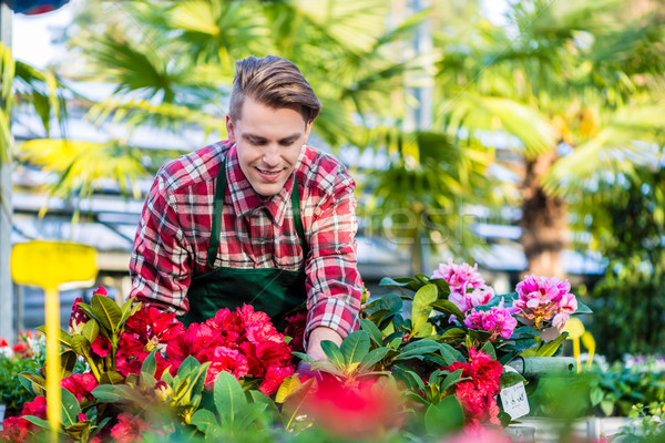 Experienced and dedicated handsome young florist grooming red houseplants Stock photo © Kzenon