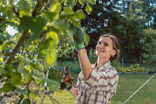 Woman in garden checking fruit tree Stock photo © Kzenon