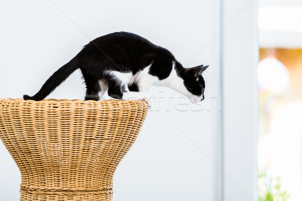 Cat about to jump from wicker stool Stock photo © Kzenon