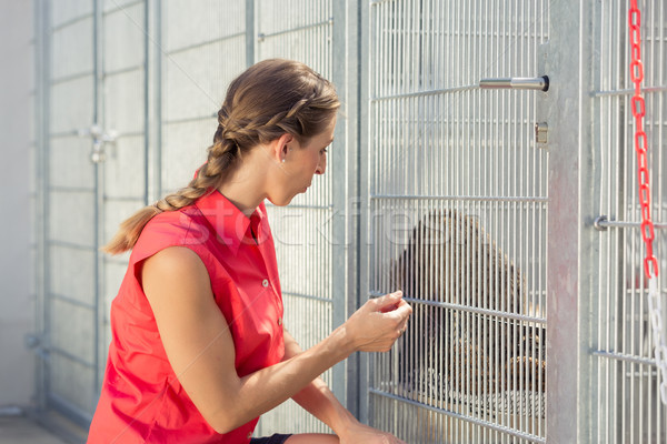 Zookeeper playing with cat in animal shelter Stock photo © Kzenon