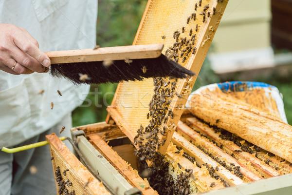 Pszczół plaster miodu szczotki człowiek ramki pracy Zdjęcia stock © Kzenon
