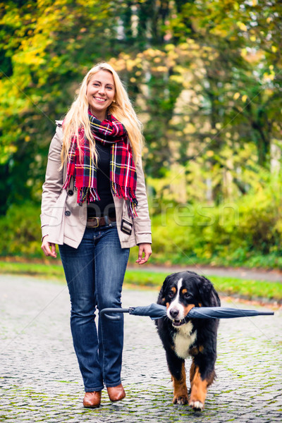 Dog carrying umbrella of his mom in autumn walk Stock photo © Kzenon