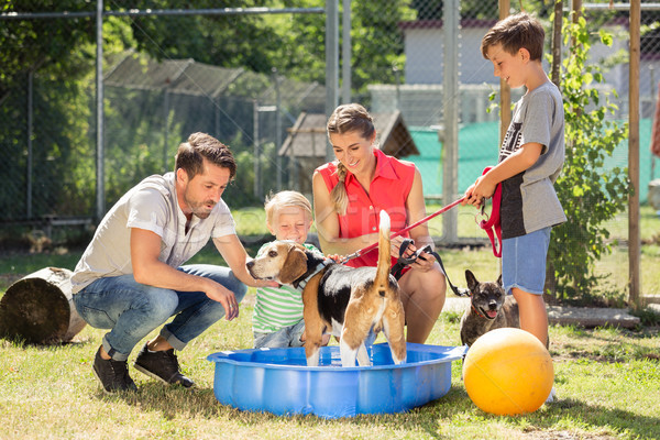Family playing with dog from animal shelter Stock photo © Kzenon