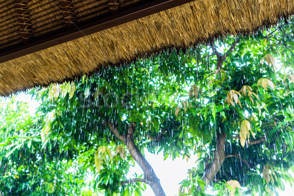 Stock photo: Tropical rain on straw roof as seen from shelter