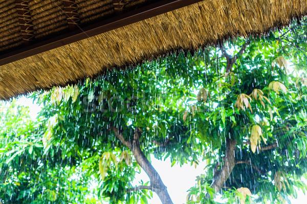 Tropikal yağmur saman çatı barınak tropical island Stok fotoğraf © Kzenon