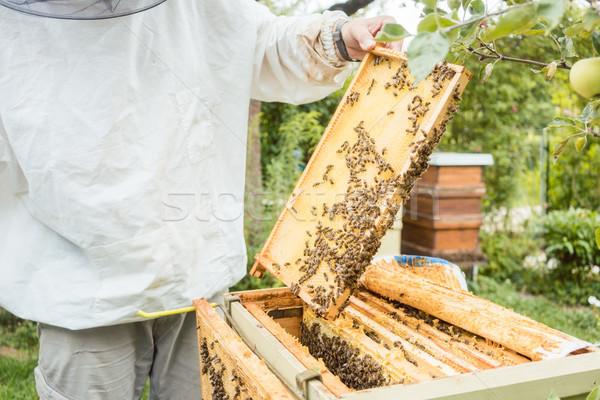 Werken bee kolonie honingraat hand Stockfoto © Kzenon