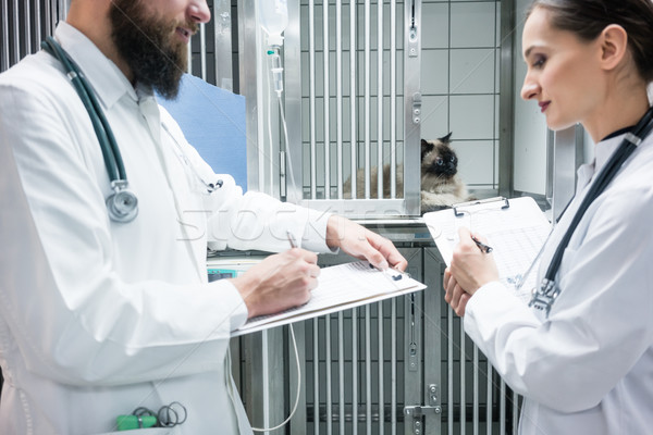 Vet doctors on visit round in ICU of veterinarian clinic Stock photo © Kzenon
