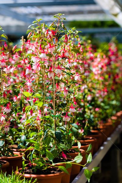 цветок завода теплица цветы магазине Сток-фото © Kzenon