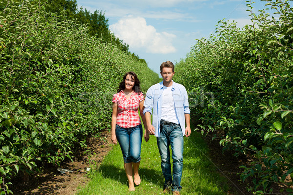 Couple in fruit orchard after summer Stock photo © Kzenon