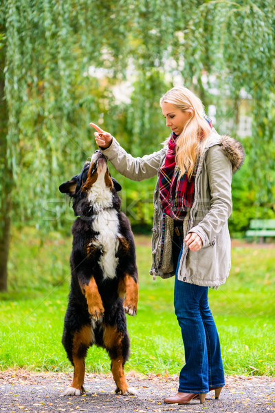 Dog in park sit up and beg for woman Stock photo © Kzenon
