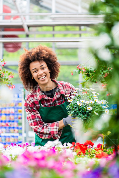 Florist smiling while holding a beautiful potted daisy flower plant for sale Stock photo © Kzenon