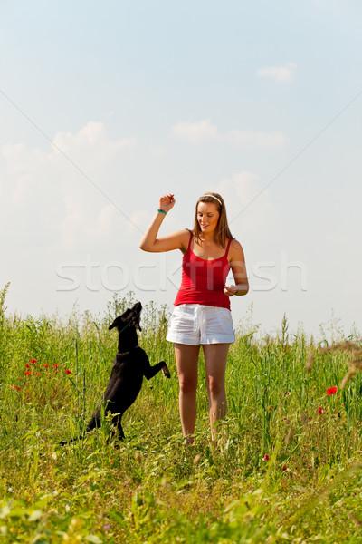 Mulher jogar cão prado verão amor Foto stock © Kzenon