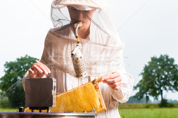 Beekeeper filling honey extractor Stock photo © Kzenon