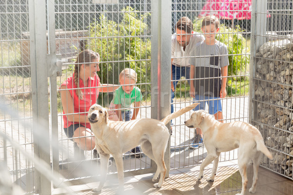 Family getting to know dogs in animal shelter Stock photo © Kzenon