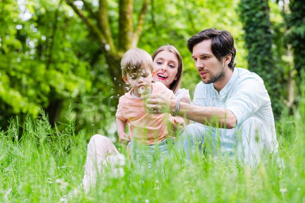 Família filho prado dandelion semente Foto stock © Kzenon
