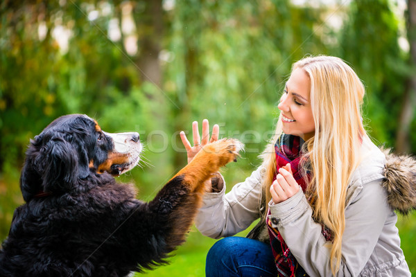Dog shaking hands with paw to his woman Stock photo © Kzenon