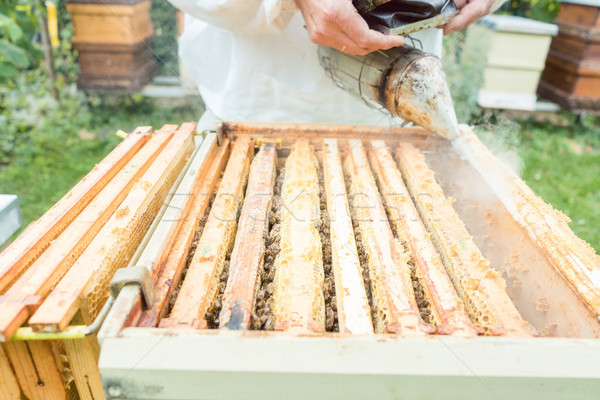 Beekeeper working with smoke on his bees Stock photo © Kzenon