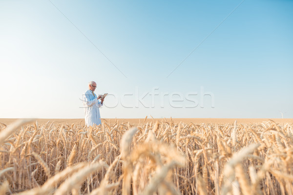 Agriculture scientist doing research in grain test field trackin Stock photo © Kzenon