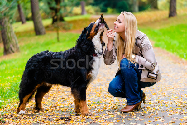 Woman and dog at retrieving stick game Stock photo © Kzenon