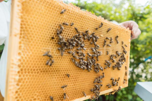 Petek arılar eller adam çerçeve Stok fotoğraf © Kzenon