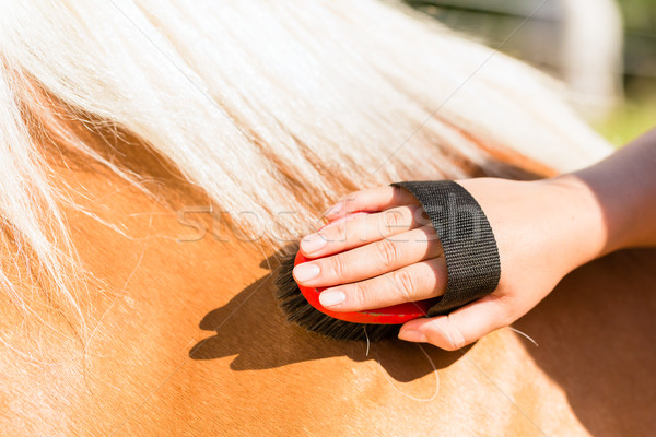 Woman combing pony on horse stable Stock photo © Kzenon
