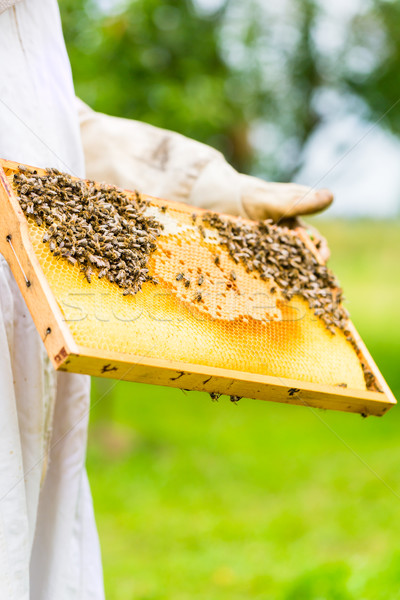 Beekeeper controlling beeyard and bees Stock photo © Kzenon
