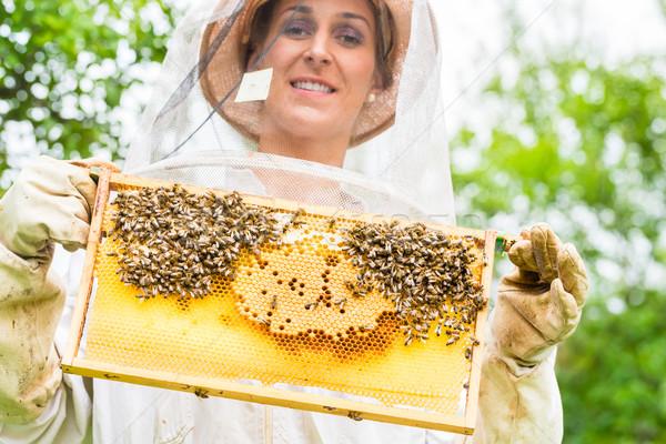 Beekeeper controlling beeyard and bees Stock photo © Kzenon