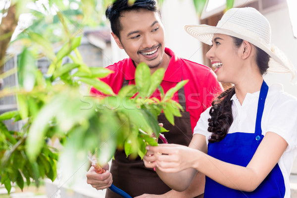 Young Asian couple smiling while harvesting together ripe red fr Stock photo © Kzenon