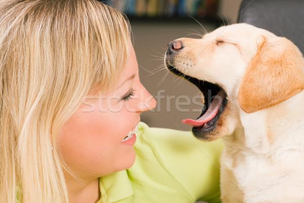 子犬 犬 かわいい ラブラドル·レトリーバー犬 ママ ストックフォト © Kzenon