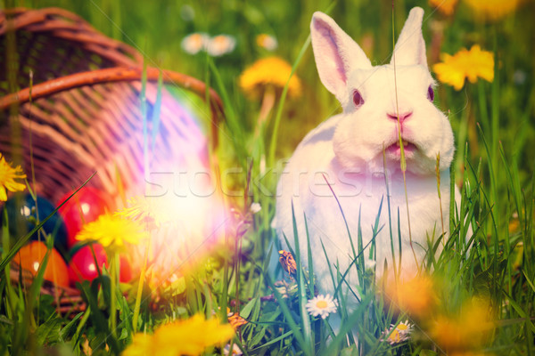 Пасхальный заяц луговой корзины трава кролик яйцо Сток-фото © Kzenon