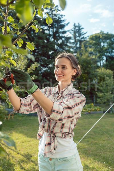 Mulher jardim árvore frutífera ao ar livre trabalhar belo Foto stock © Kzenon