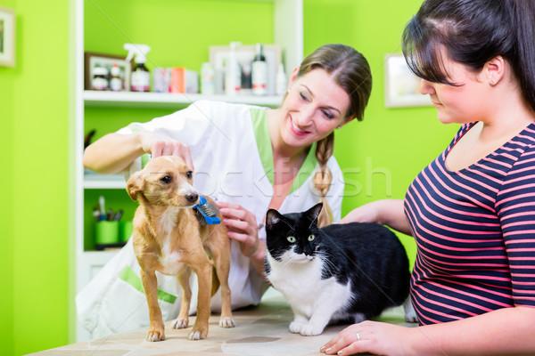 Gato cão juntos veterinário animal de estimação cabeleireiro Foto stock © Kzenon