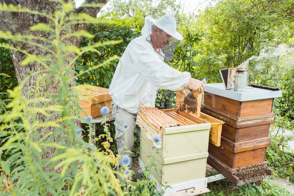 Beekeeper working with bees in beehouse Stock photo © Kzenon