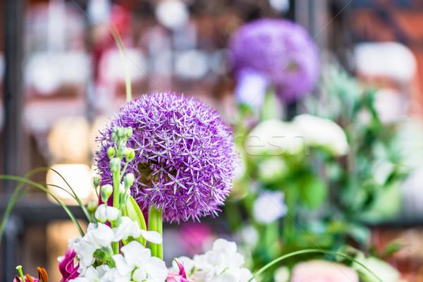 Close-up of a purple round allium flower in a modern shop Stock photo © Kzenon
