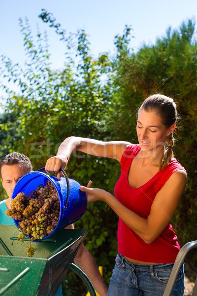 Woman working with grape harvesting machine Stock photo © Kzenon