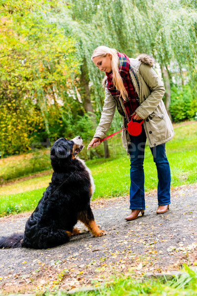 Woman putting leash on dog for a walk Stock photo © Kzenon