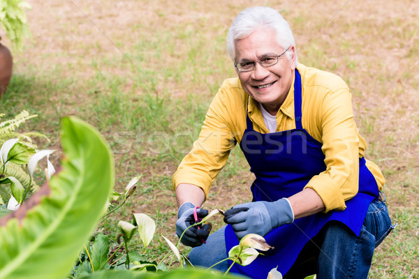 Portrait of active Asian elderly man smiling while pruning green Stock photo © Kzenon