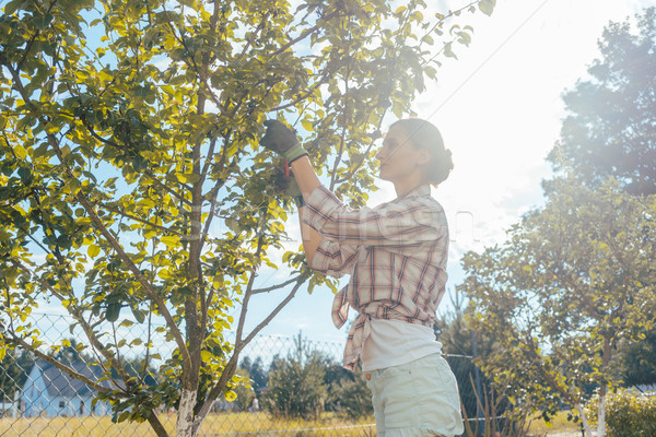 Stock photo: Woman in garden checking fruit tree